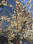 Tree, blossoms